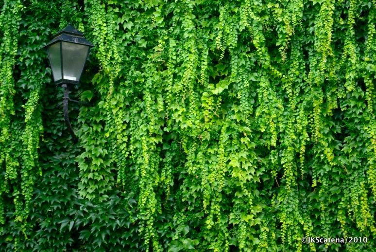 Green Texture, Salzburg