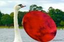 Anish Kapoor @ Kensington Gardens: Swan
