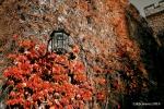 London: Dean's Yard, Red