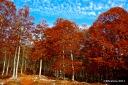 Abruzzo: Autumn trees