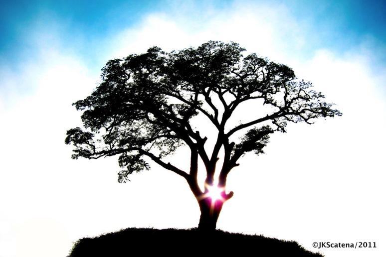 Atibaia: Tree of Life