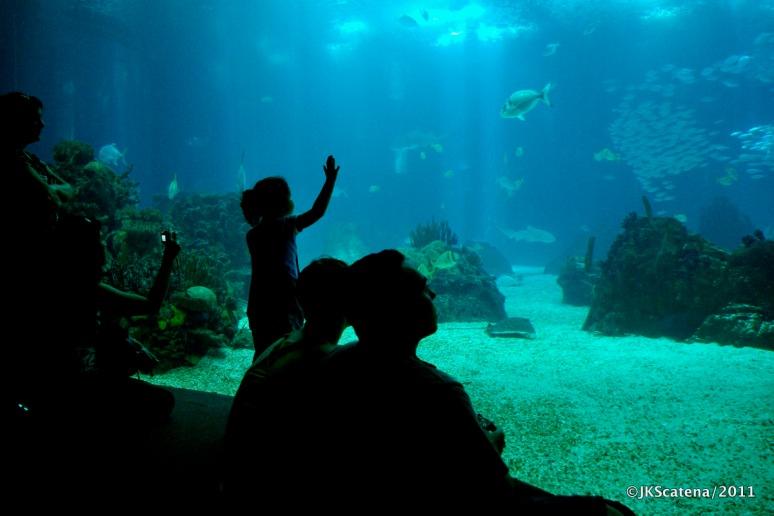 Portugal, Lisbon: Oceanarium