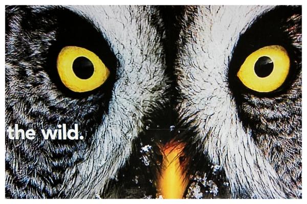 London: The Wild