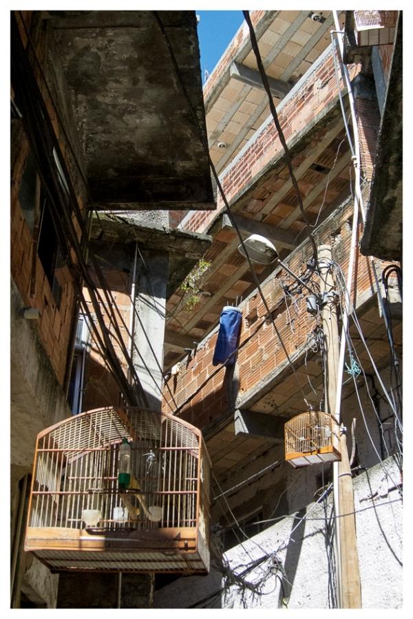 Rio de Janeiro: The freedom of the living