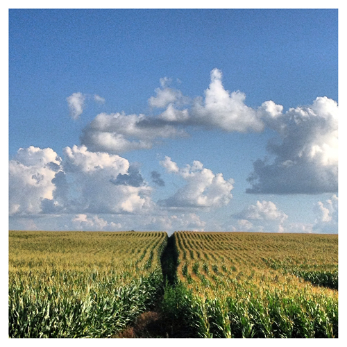 Illinois: Nothing but Corn & Clouds